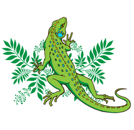 blog_algodon_organico_iguana