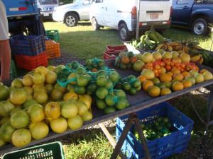 feria_organica_costa_rica_el_trueque_citricos_naranjas