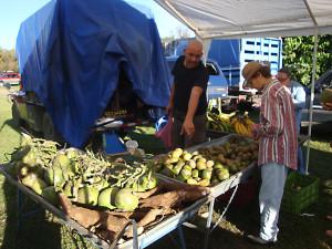 Platano, pipa y yuca organicos