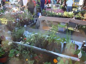 Vivero y plantas en maceta
