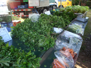 Yerbas y zanahorias orgánicas